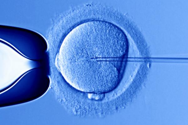 Sperma Eier ivf icsi Behandlung